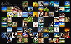 webdesign : events, animals, creative