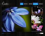 webdesign : seed, arrangement, composition
