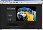 webdesign : help, parrot, lion