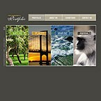 webdesign : portfolio, animals, experience